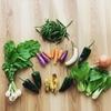 食べ物とエネルギー 今自分に必要な波動を取り入れる