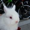 【ウサギ】認定動物看護師が語る、「ウサギを飛行機に乗せる」ために必要な4つのこと【前編】
