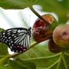 秋の虫の話 2題