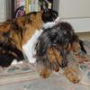 仲良しなうちのわんこと猫やん My cats and dogs are really good friends!