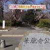 【群馬県伊勢崎市】華蔵寺公園~桜を撮りに人気のお花見スポットへ~