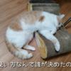 雨田甘夏、煩悩です。【猫とカリカリと満腹事情】