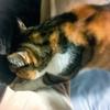 【愛猫日記】毎日アンヌさん#135