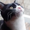 今日の黒猫モモ&白黒猫ナナの動画ー710