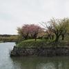 2021桜めぐり 遅かった~っ!花筏。五稜郭公園(4)