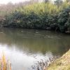 狩猟解禁前の下見。今回は池へ。初めての狩猟解禁日の出猟予定。もちろん休み申請し、目標はマガモ・カルガモを初日5羽。