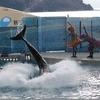 Kiss X6iを使って江ノ島水族館でイルカショーを撮ったこと