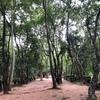 【カンボジア旅行】森の中にひっそりと佇むベンメリア遺跡@シェムリアップ