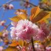 新園地での草刈り&石川直樹「この星の光の地図を写す」&4月のまほろば句会♪