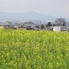 夜都伎神社~神社/古墳群~万葉集歌碑 (早春の山の辺の道 南コース2)