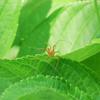 今日も蜘蛛三昧