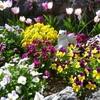 My Garden in March 2
