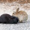 ウサギ島は本当にウサギとうんこの島やった!