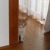 自由猫ダイちゃんの甲斐性Ⅱ