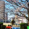 桜の飛鳥山と都電^^