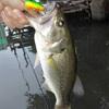 数釣りの日