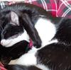 今日の黒猫モモ&白黒猫ナナの動画ー666