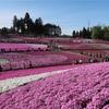 9種類40万株以上!山の麓に広がる芝桜の絨毯! 秩父市「羊山公園」