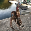 タコは漁港で簡単に釣れます🐙
