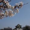 大濠公園でお花見、猫に桜のおみやげ