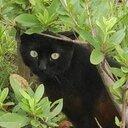 セキュリティ猫の備忘録