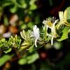 みかんの花&ウツギにアオスジアゲハ&「単眼複眼」にウスバシロチョウの写真♪