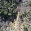 多治見市 虎渓山湿地にてドローンによる空撮調査を行いました!