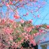 印象的に梅を撮影する3つのポイント!少し味のある写真の撮り方!14