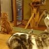 やっぱり猫が好き ~元祖猫カフェへ行く~