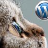 WorddPressワードプレス制作代行って何のことだか判らない!ごもっともです!ワードプレス制作代行とは
