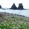 逢ヶ浜海水浴場 弓ヶ浜から徒歩5分でシュノーケリング天国!