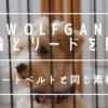 【シートベルトと同じ素材】WOLFGANG(ウルフギャング)の首輪とリードを買いました。【レビュー】