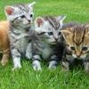 【子猫の飼い方】もしも、子猫を拾ったらお世話できますか?