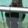 昨日の上野動物園 ベストショット?