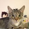 バンクーバーの保健所で、波乱万丈の猫生を生きる美猫を保護した話