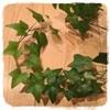植物の生長記録