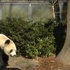 2017/01/17 part1 上野動物園