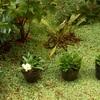 ★梅雨が明け、新しい花が咲き誇る季節。花の色もイロイロ。