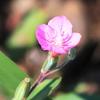 2020年8月の観察記録(植物)