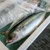 2018年9月15日 小浜漁港 お魚情報