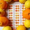 フレッシュつちやま毎日柑橘祭