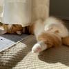 るるちゃん写真集vol.14「朝から癒し効果全開の愛猫」