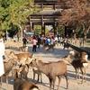 奈良公園(鹿と紅葉)2018