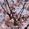 ラン記録 ~2018/4/1~ ここまで走りやすい季節を知るともう中毒