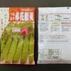 絹莢えんどうの種蒔き