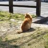 【散歩】妊娠中の猫との出逢い