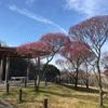 荒山公園@堺
