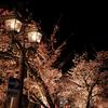熱海 夜桜散歩