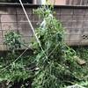 家庭菜園、崩壊
