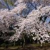 京都上賀茂神社の曲水の宴と入選した友人の短歌